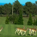campo-de-Golf-de-La-Rasa-berbes